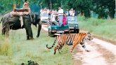 राजाजी नेशनल पार्क में हो रहा बाघों को लाने की योजना पर काम